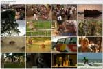 Obie¿y¶wiat Bangladesz / Globe Trekker Bangladesh (2011)  PL.DVBRip.XviD / Lektor PL